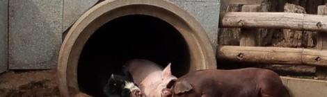 畜産協議会7