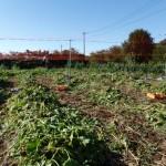 収穫後の圃場
